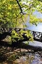 Free Autumn Leaves Stock Image - 16784811