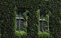 Free Green Window Royalty Free Stock Photo - 16787695