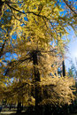 Free Golden Forest Stock Photo - 16788230