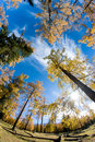 Free Golden Forest Royalty Free Stock Photos - 16788468