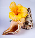 Free Yellow Flower And Shells Royalty Free Stock Photography - 16788717
