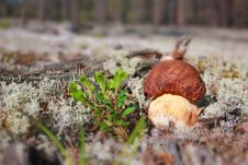 Free Cep In Nature Stock Image - 16781431