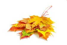 Free Autumn Leaves Stock Photography - 16782362