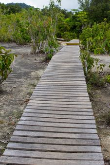 Free Wooden Walkway Stock Photo - 16783180