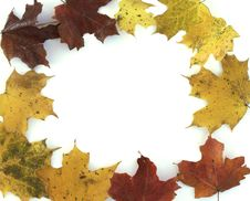 Free Maple Leaf Frame Royalty Free Stock Photo - 16783495