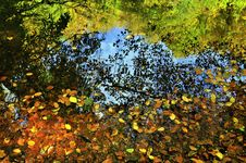 Free Autumn Leaves Royalty Free Stock Image - 16784276