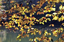 Free Autumn Leaves Royalty Free Stock Photo - 16784715