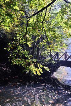 Free Autumn Leaves Stock Photos - 16784863
