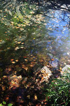 Free Autumn Leaves Royalty Free Stock Photos - 16784898