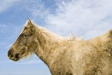 Free Beautiful Brown Foal Royalty Free Stock Image - 16786676