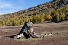 Free Stump In Forest Stock Images - 16788064