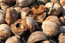 Free Coconut Brown Husk Hairy Stock Photos - 16788413
