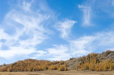 Free Cloudscape And Golden Forest Stock Photos - 16788433