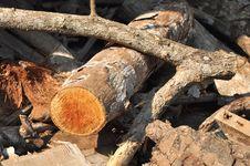 Free Wood Log Timber Stick Royalty Free Stock Image - 16788636
