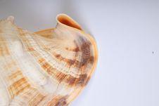 Free Studio Shell Shot Stock Photo - 16788680
