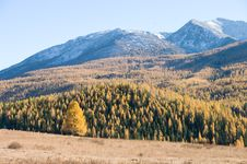 Free Snow Mountain And Golden Frosty Royalty Free Stock Photos - 16789018