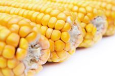 Free Yellow Maize Stock Images - 16789074