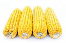 Free Maize Royalty Free Stock Photo - 16789085
