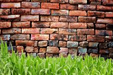 Free Green Grass And Old Brickwall Stock Image - 16789211