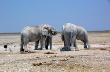 Free Elephants In Etosha Stock Photography - 16789382