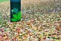 Free Fallen Leaves Stock Photo - 16790430
