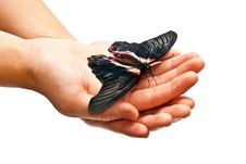 Free Butterfly In Man S Hands Royalty Free Stock Photography - 16790727