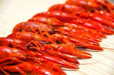 Free Crayfishes Stock Photos - 16791083
