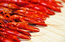 Free Crayfish Pincer Stock Photo - 16791090