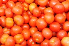 Free Tomatoes Stock Image - 16794511