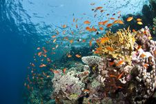 Free Vibrant And Colourful Tropical Coral Reef. Royalty Free Stock Images - 16797249