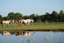 Free Horses Meeting By A Pond Stock Image - 16797441
