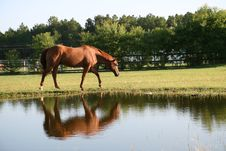 Free Horse At The Pond Stock Images - 16797504