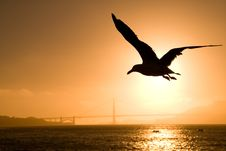 Free The Bird Stock Images - 16798294