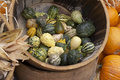 Free Green And Wihite Pumpkin In A Barrel Royalty Free Stock Images - 1681899