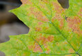 Free Wet Autumn Leaf Against Dark Background Stock Images - 1682784