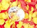 Free Diamond And Flower Petals Stock Image - 1689811