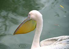 Free Pelican Island 8 Stock Image - 1682271