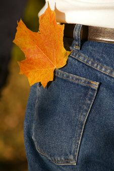 Free Colored Leaf In Hip Pocket Royalty Free Stock Images - 1682729