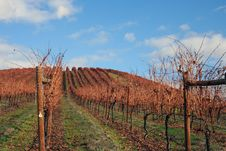 Free Landscape Of Autumn Vineyard Stock Images - 1683894