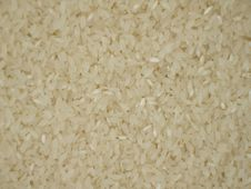 Free Rice In Bulk Royalty Free Stock Photography - 1684827