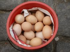 Eggs In Pail Royalty Free Stock Photo