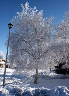 Free Pict 5464 Birch Tree And Lamp Post On Snow Covered Street Royalty Free Stock Photo - 1685945
