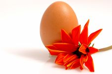 Free An Egg And Orange Flower Stock Image - 1686001