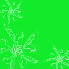 Free White Flowers On Green Background Royalty Free Stock Photos - 1689758