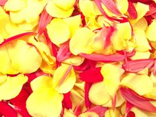 Free Flower Petals Background Stock Image - 1689881