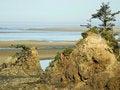 Free Low Tide Tree Stock Photos - 16804693