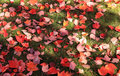 Free Autumn Leafs, Colors Of A Season. Stock Images - 16805804