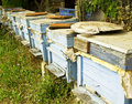 Free Wooden Beehive Royalty Free Stock Image - 16805916