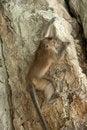 Free Climbing Monkey Stock Photo - 16809020