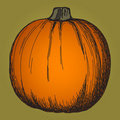 Free Cute Pumpkin Sketch Stock Photography - 16809792